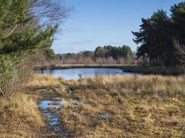 Pond in Skipwith Common National Nature Reserve North Yorkshire England photo