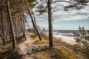 Baltic sea coastline forest and sand dunes with pine trees photo