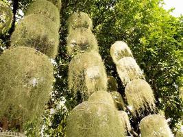 jardín tropical de plantas verdes colgantes foto