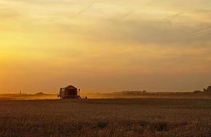 Combine harvesting cereals at sunset photo