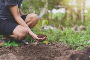 World Environment Day,  Planting trees and love the environment, love nature. photo