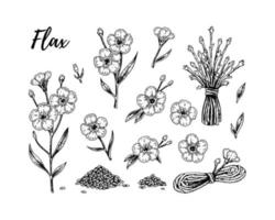 Set of hand drawn flax flowers, branches and seeds. Vector illustration in sketch style for linen seeds and oil packaging