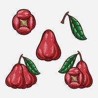 rose apple fruit vector hand drawn sketch illustration