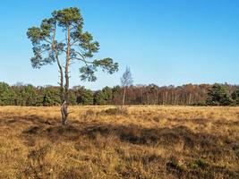 Blue sky over Skipwith Common North Yorkshire England photo