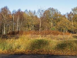 Winter vegetation in Skipwith Common Nature Reserve North Yorkshire England photo