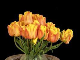 Beautiful tulip arrangement with a plain black background photo