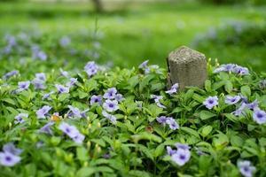 El enfoque selectivo del antiguo poste de hormigón con pequeñas flores de color púrpura y arbusto verde en primer plano y fondo foto