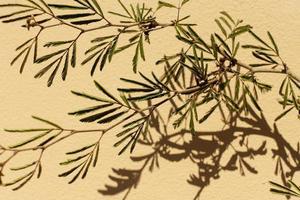 planta verde sobre un fondo beige foto