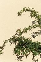 hojas verdes sobre un fondo amarillo claro foto