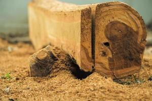 Close up of the surface of a log while being sawed in a factory with sawdust photo
