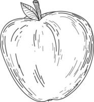 Doodle cute apple isolated line Hand drawn vector