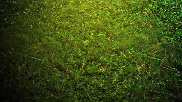 Cinematic Background with Green Grass and Light Effect on Summer Background video