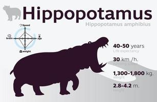Ilustración de información de hipopótamo en un vector de fondo 10