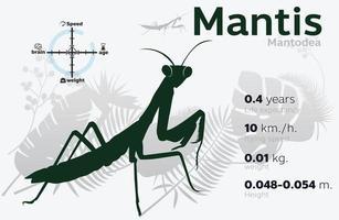 Ilustración de información de mantis presa en un vector de fondo 10