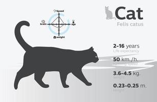 Ilustración de información de gato en un vector de fondo 10