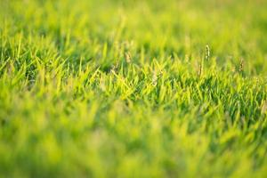 Closeup of leaves of grass growing in the field with sunlight on a sunny day photo