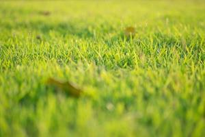 Primer plano de hojas de hierba que crecen en el campo con la luz del sol en un día soleado foto