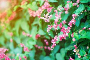 Selective focus of little blossom flowers with blurred leaves in background photo