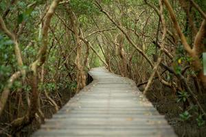 Landscape of mangroves forest with wooden walkway for surveying the ecology photo
