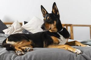 Adorable dog sitting on bed photo