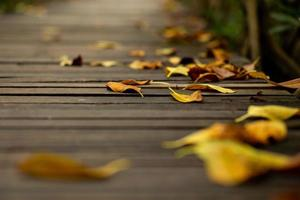 Abstract texture and background of dried leaves falling on the wooden walkway in the forest photo