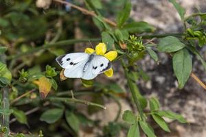 White butterfly on yellow flower photo