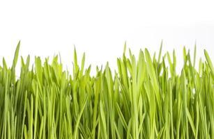 Green grass on white background photo