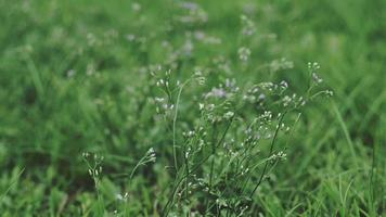 Tiny Flower in Meadow Blowing by Wind in Summer Day video