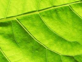 Close up of green leaf texture photo