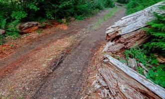 Logging Road - A forest road view along FR2266 near Daly Lake - Cascade Range - southwest of Marion Forks, OR photo