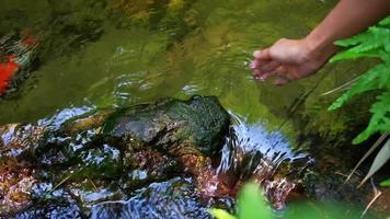 mulher tocando água limpa em pequenos riachos na floresta video
