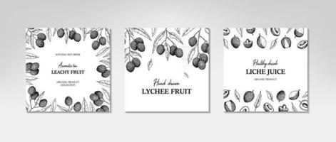 Set of hand drawn lychee designs for packaging vector