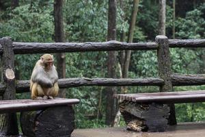 Primate on bench photo