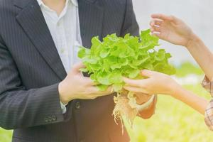 Close-up hand holding a salad and organic vegetables from the farm. Growing vegetables and hydroponics. Health concept for agriculture photo
