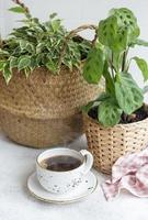 Ficus in a straw basket maranta and cup of coffee photo