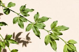 hojas verdes en una vid foto