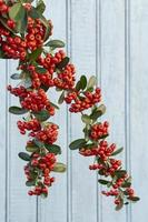 Red berries on a branch photo