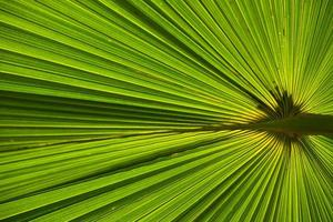Big green leaves under the sunshine photo