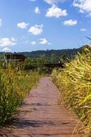 Walk way pass rice field to the house with hill background. photo