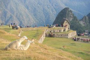 machu picchu famosa ciudad antigua inca y llama foto