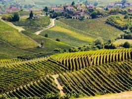 Langhe vineyards and hills in autumn photo