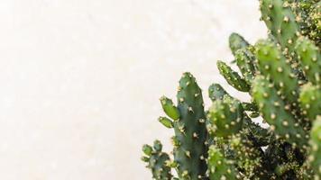 cactus con espacio de copia foto