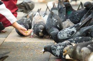 Children feeding pigeons photo