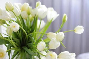 White tulips in vase photo