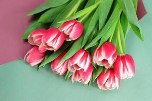tulipanes rojos y blancos foto