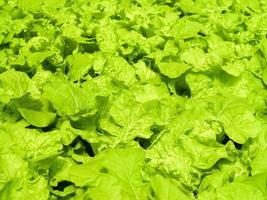 granja hidropónica para alimentos foto