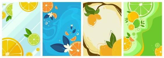 Collection of citrus fruit posters vector