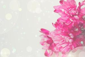 Pink flowers greeting card floral background with copy space photo