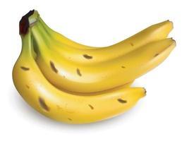 Bunch of ripe bananas vector