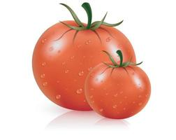 Fresh juicy red tomato with water droplets with isolated background vector